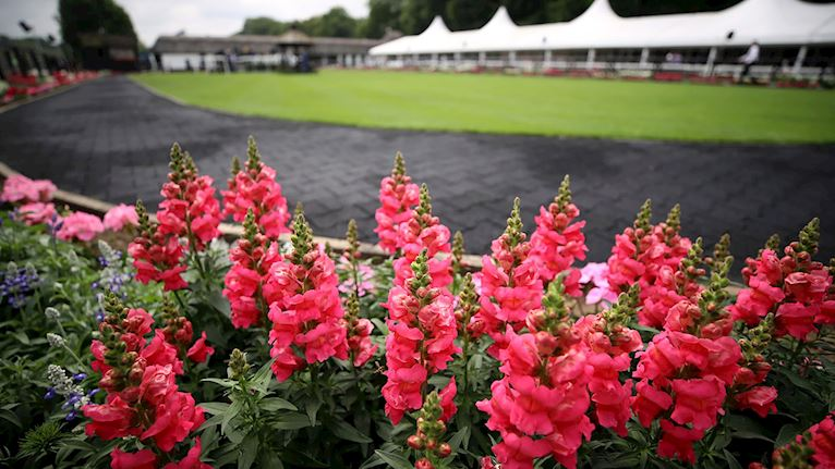 Parade Ring Flowers.jpg
