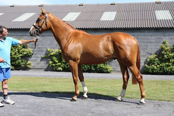 South West Syndicate Horse - Diamond River
