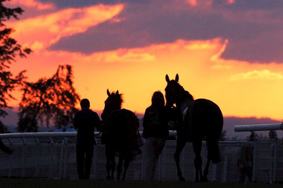 Orange and purple sunset sky with horse silhouettes of horses being led in the foreground