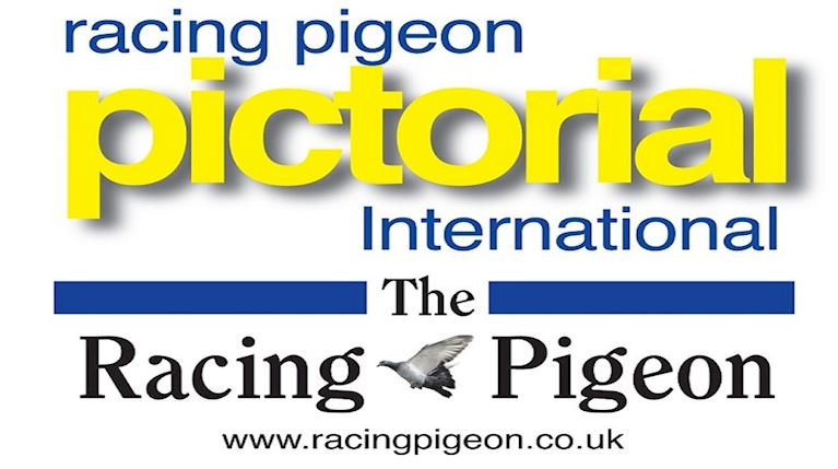Racing_Pigeon_Exhibition_at_Epsom.jpg