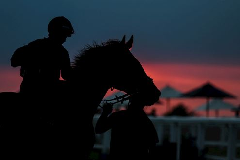 Horse silhouette in front of the sunset