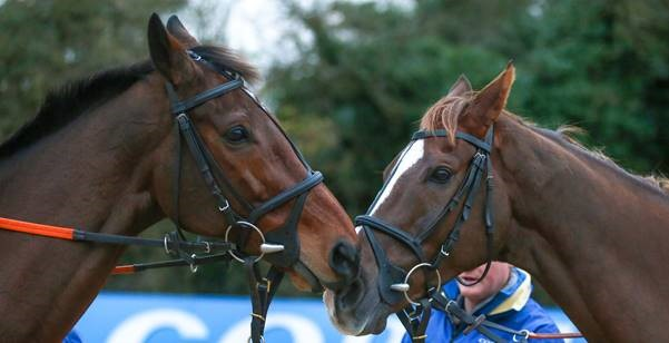 haydock-Nose-to-Nose